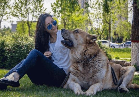nuối chó đực hay chó cái, lưu ý khi nuôi chó, lợi ích của việc nuôi chó đực