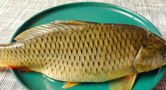 chiên cá, rán cá, dạy nấu ăn