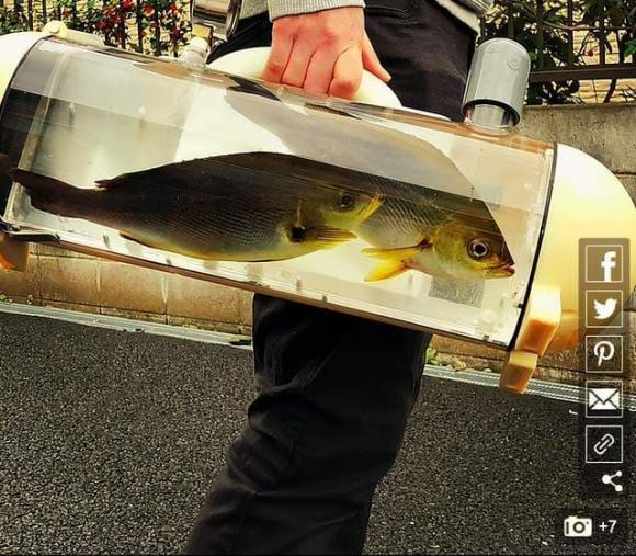 bình cá, phát minh mới, bể cá di động