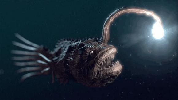 cá bóng đá, quái vật biển, sinh vật biển