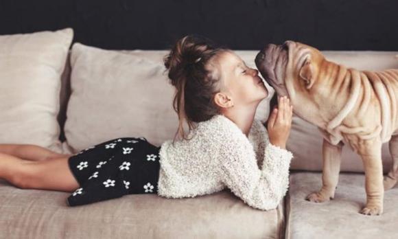 lưu ý khi nuôi chó, chăm sóc chó nhà, những thông tin thú vị về loài chó