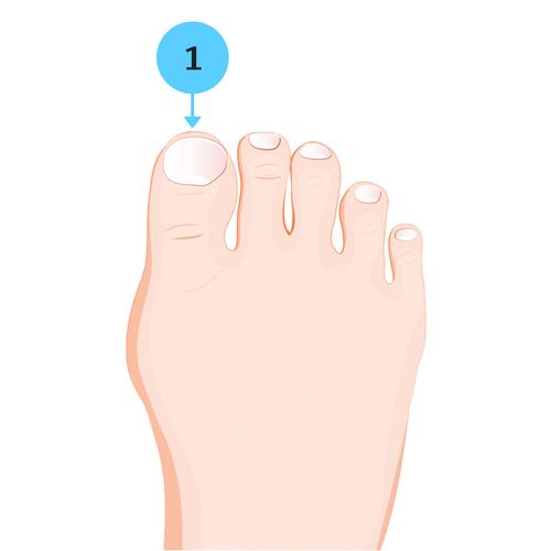 ngón chân, chiều dài ngón chân, ngón chân dài nhất, Đoán vận mệnh qua chiều dài ngón chân, vận mệnh