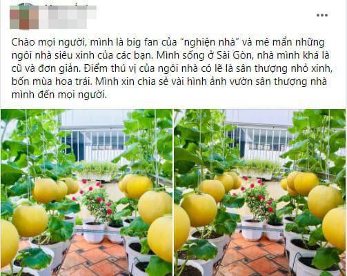 trồng dưa, khu vườn trên sân thượng, trồng dưa trên sân thượng, giới trẻ