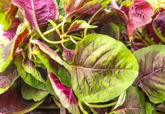 bổ sung canxi, rau nhiều canxi, rau mùa hè