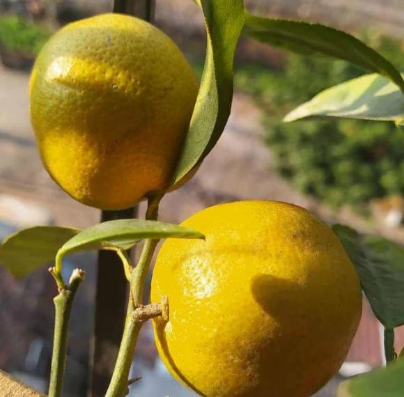 bổ sung vitamin C, trái cây, hoa quả hè