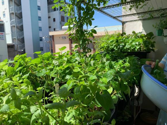 trồng rau, trồng rau ở ban công, nghiện nhà