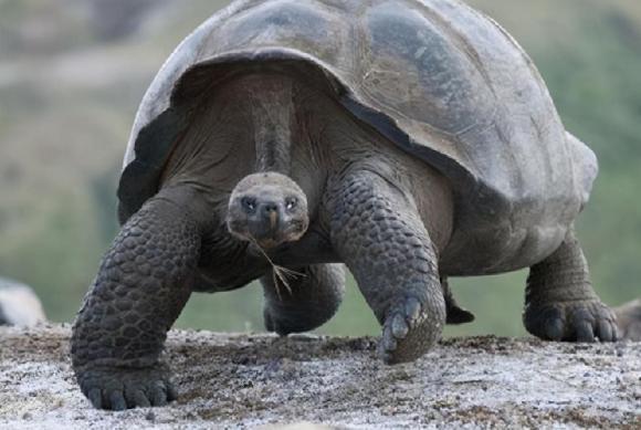 bảo vệ môi trường, tuyệt chủng, loài rùa sống lâu nhất