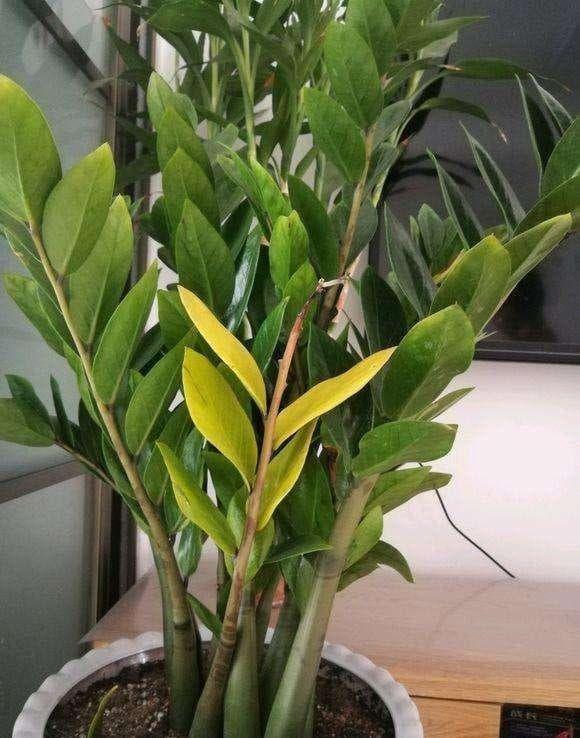 không nên trồng cây này trong phòng khách, nội thất gia đình, phong thủy gia đình