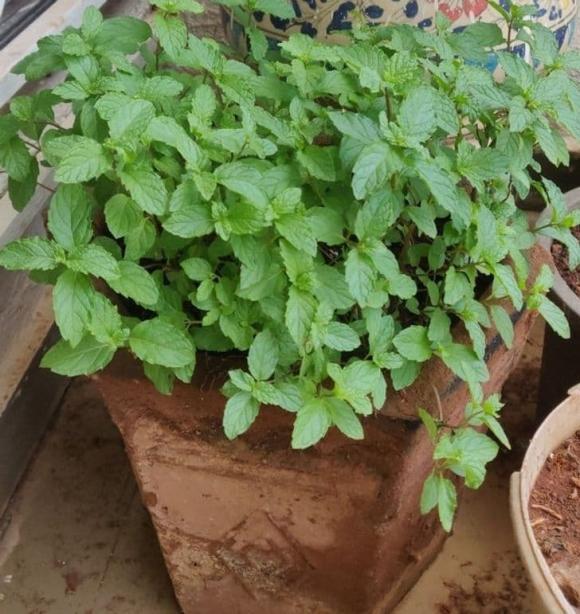 trồng cây, trồng cây trong nhà, nội thất