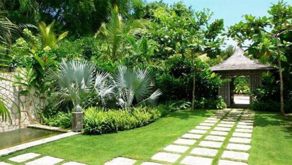 cây phong thủy, vị trí trồng cây, phong thủy nhà