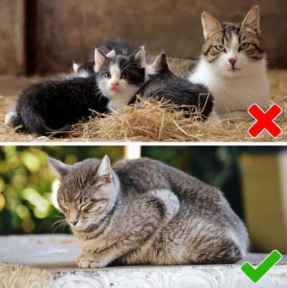 thú cưng, chăm sóc thú cưng, kiến thức