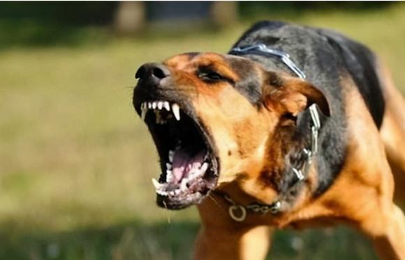 làm sao khi gặp chó tấn công, bảo vệ bản thân, phương pháp bảo vệ bản thân hiệu quả