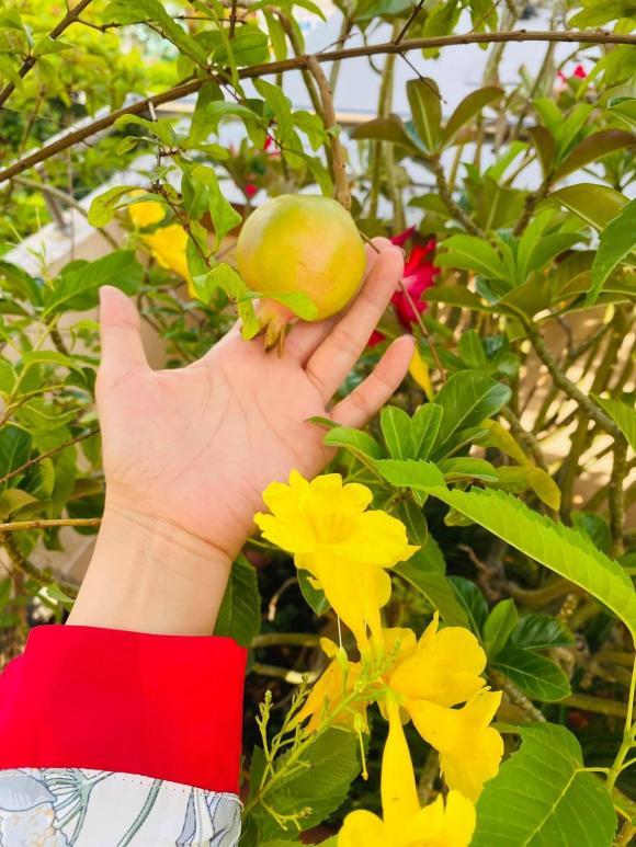 trồng rau trên sân thượng, trồng rau, cách trồng rau