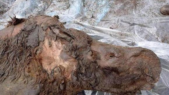xác sinh vật từ 50.000 năm, tan băng, xác sinh vật