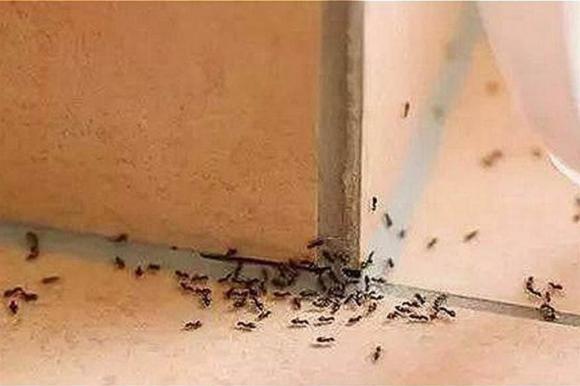 diệt kiến, côn trùng, loại bỏ kiến, đuổi kiến, mẹo vặt