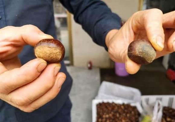 hạt dẻ, bảo quản hạt dẻ, chọn hạt dẻ ngon, kinh nghiệm đi chợ, chọn mua hoa quả