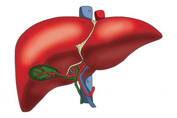 bệnh gan, dấu hiệu ung thu gan, tầm soát ung thư gan