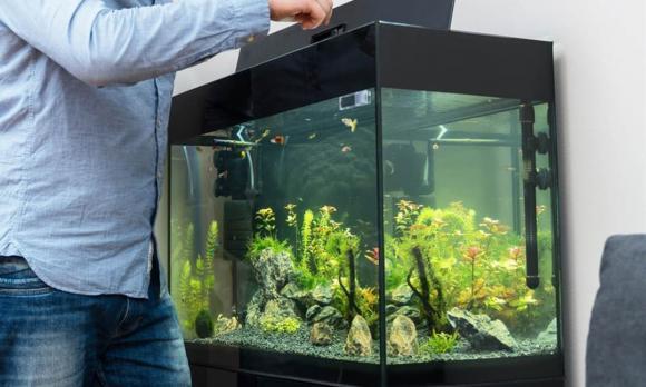 bể cá, phong thủy bể cá, nuôi cá