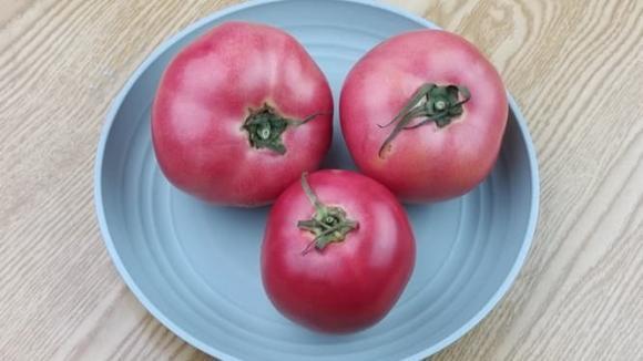 trồng rau, mau rau, đi chợ, kinh nghiệm mua rau quả, mẹo hay