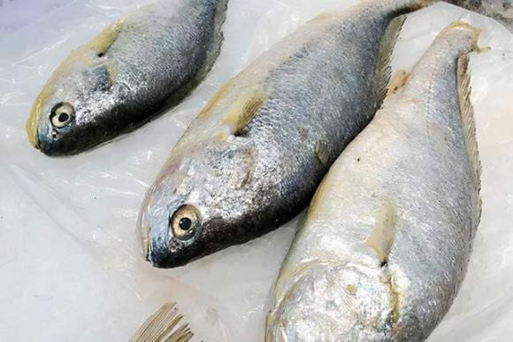 cá tự nhiên, cá nuôi, lưu ý khi ăn cá