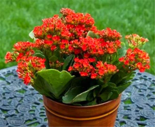 hoa chịu lạnh 3