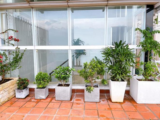 Không gian vườn nhà MC Phương Mai 7
