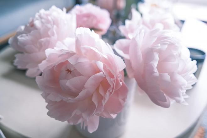 Lý Quí Khánh và hoa 8