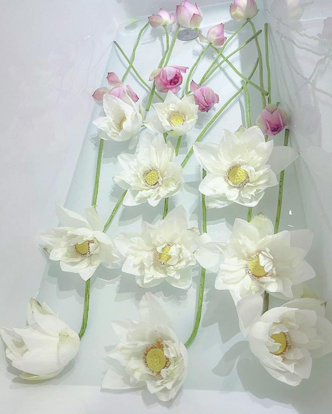 Lý Quí Khánh và hoa 0