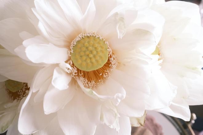 Lý Quí Khánh và hoa 6